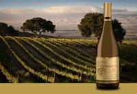 Vineyard and Chardonnay Bottle of Sierra Mar