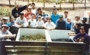 Grape harvest 1995