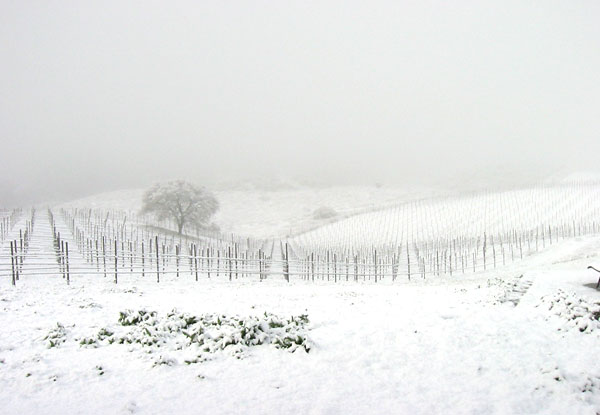 Brosseau Vineyard - Winter 2016