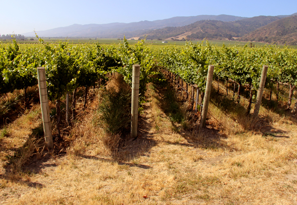 Fogstone Vineyard