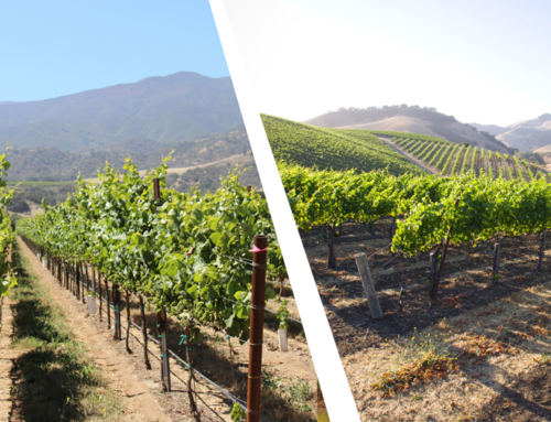 Rincon and Soberanes Vineyard Wines