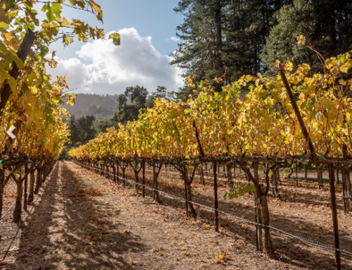 Palo Alto Online –  The 2020 vintage: How Peninsula wineries are struggling — and innovating — during the pandemic